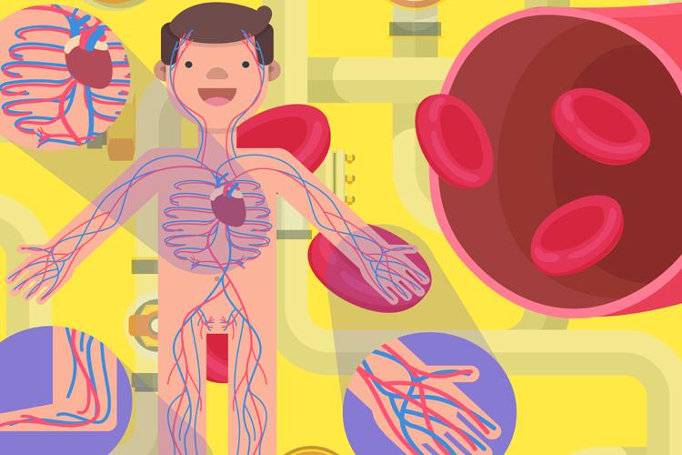 Pembuluh Darah: Saluran Penyuplai Kehidupan